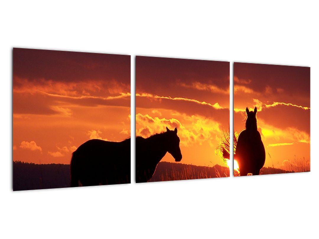 Obraz - kone pri západe slnka