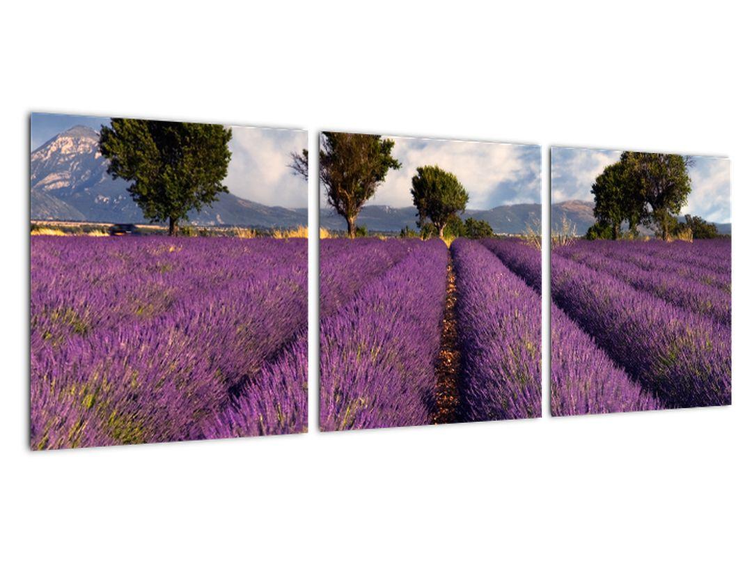 Obraz levanduľového pole