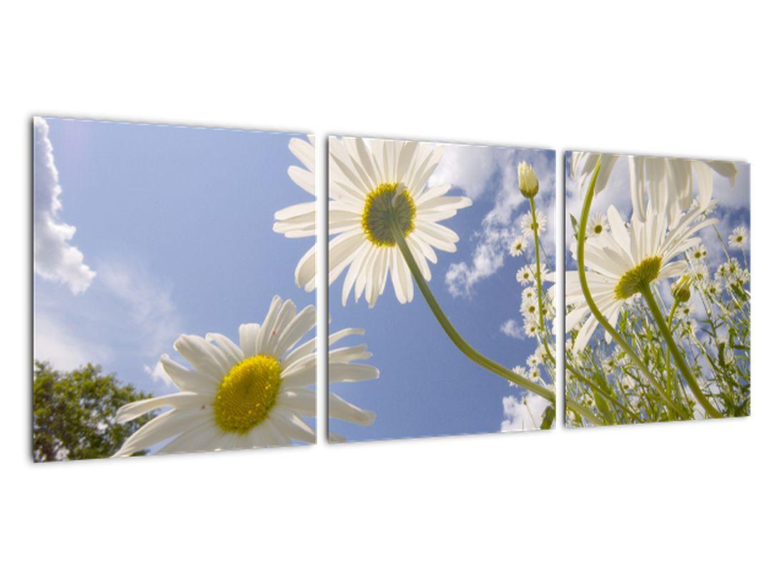 Obraz - margaréty na jar