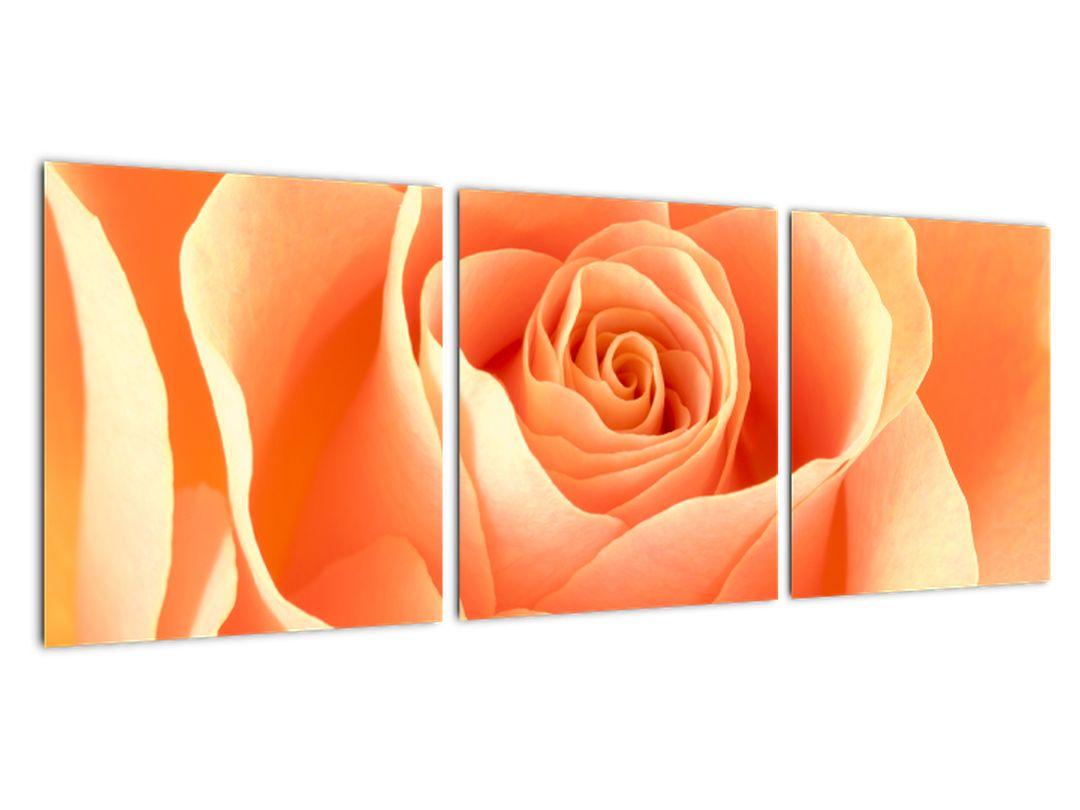Obraz oranžové ruže