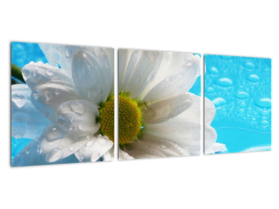 Obraz kvetu margaréty