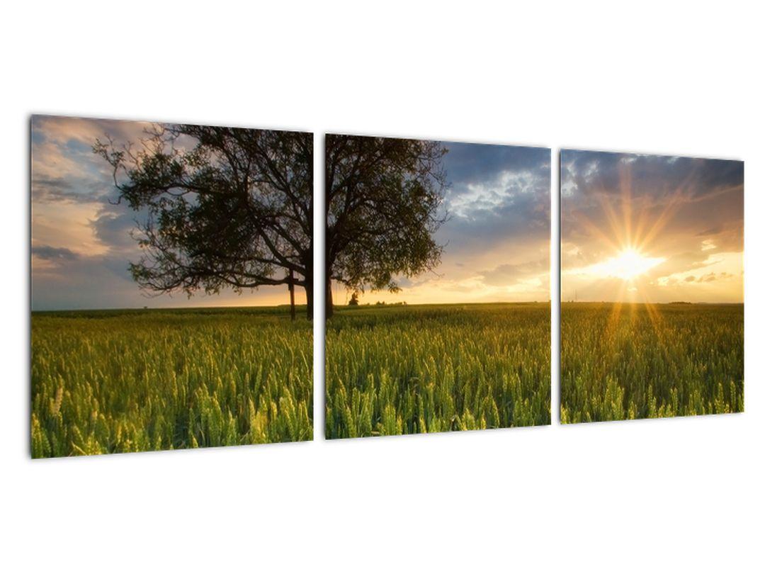 Moderný obraz - pole