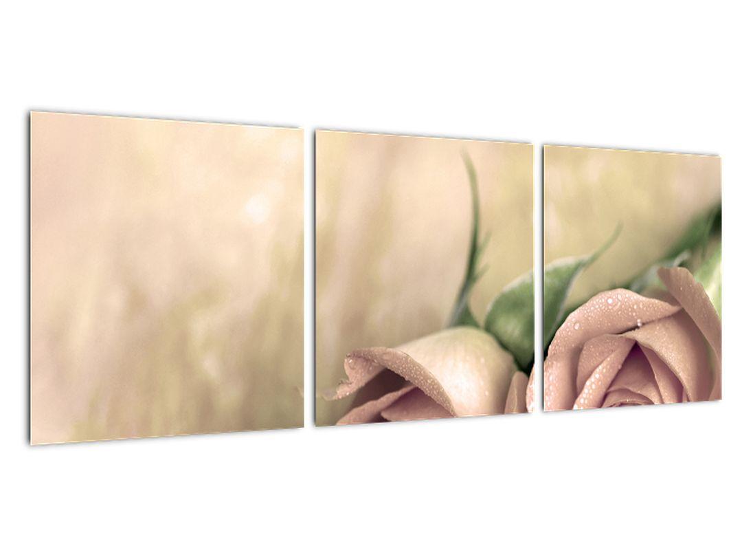 Obraz na stenu - ruže