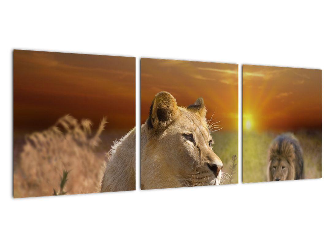 Obrazy zvierat