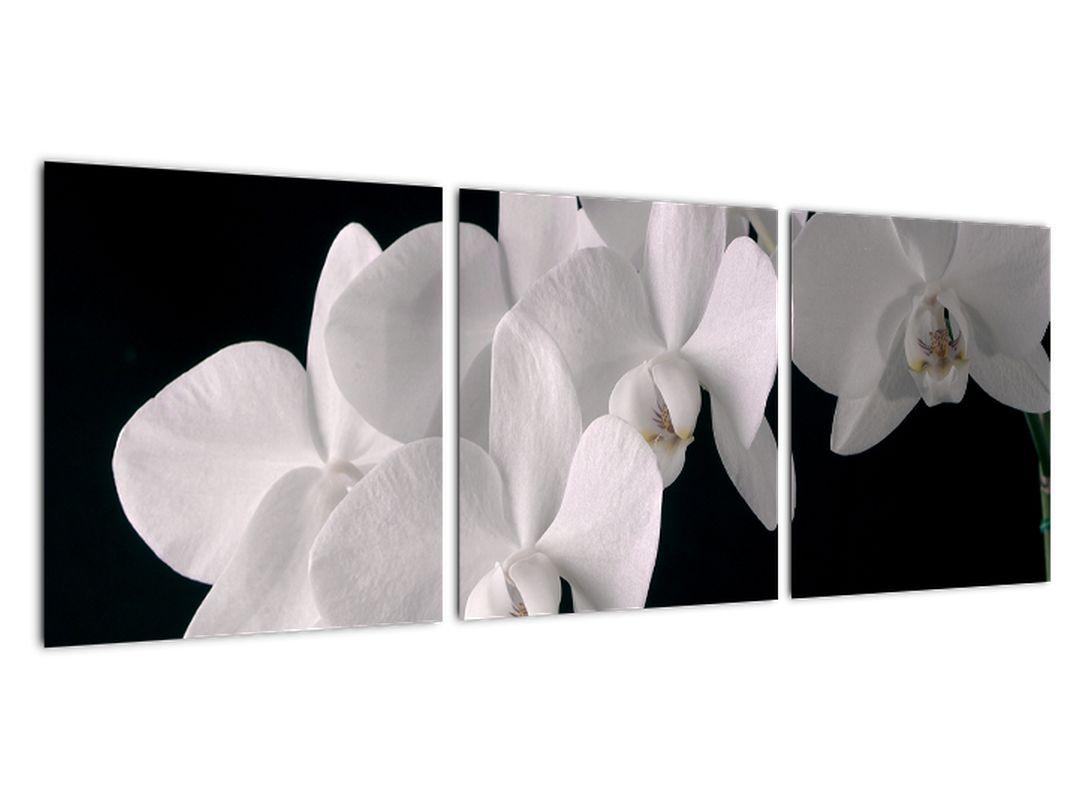 Obraz - biele orchidey