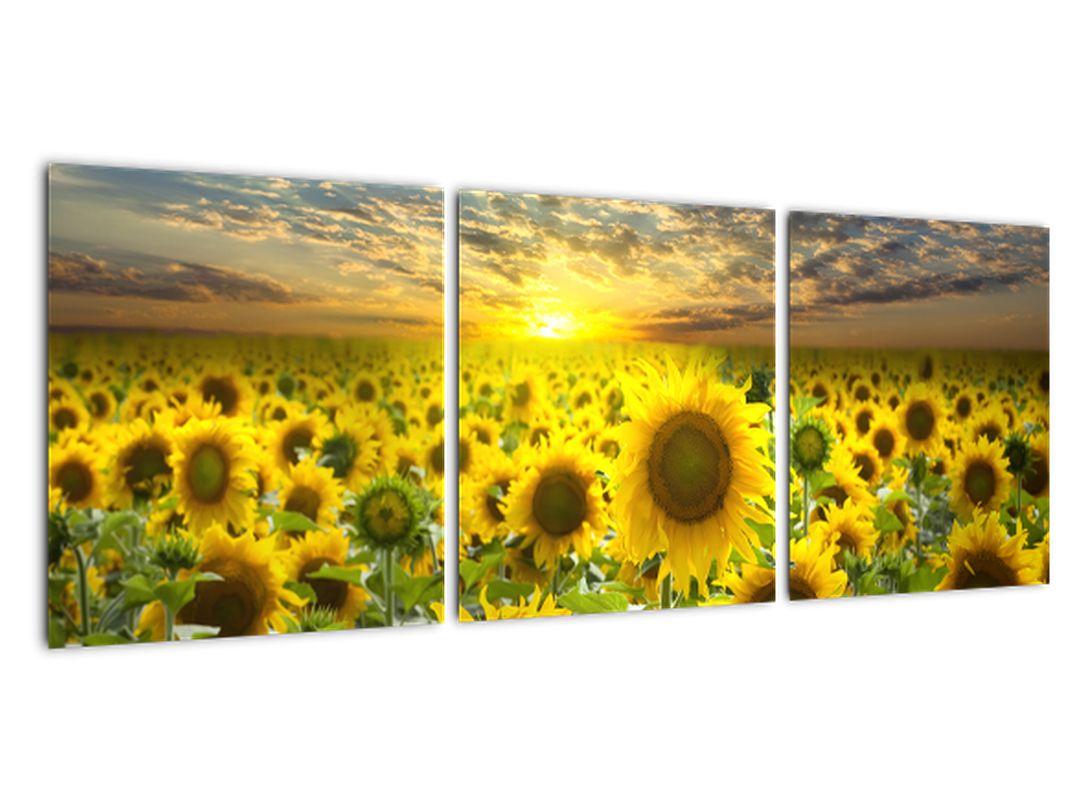 Obraz slnečníc