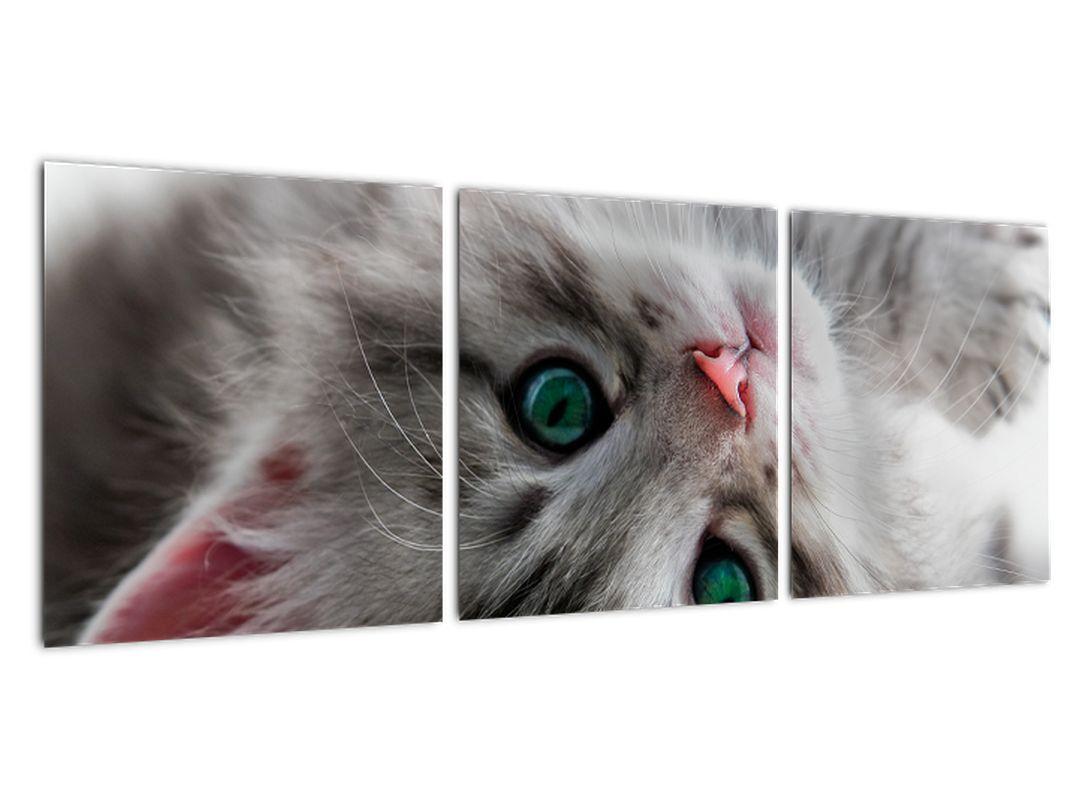 Obraz mačky