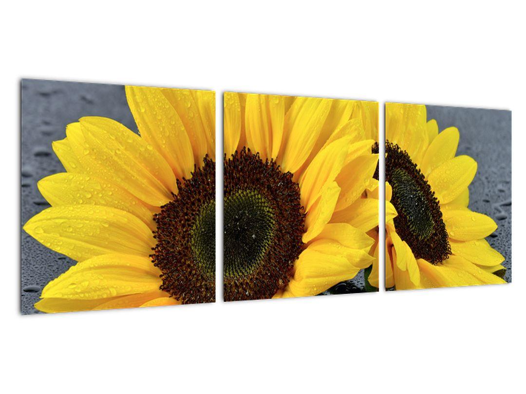 Obraz slnečnica