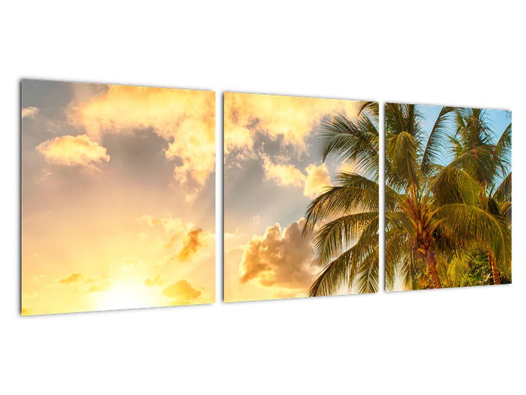 Obraz palmy na piesočnatej pláži
