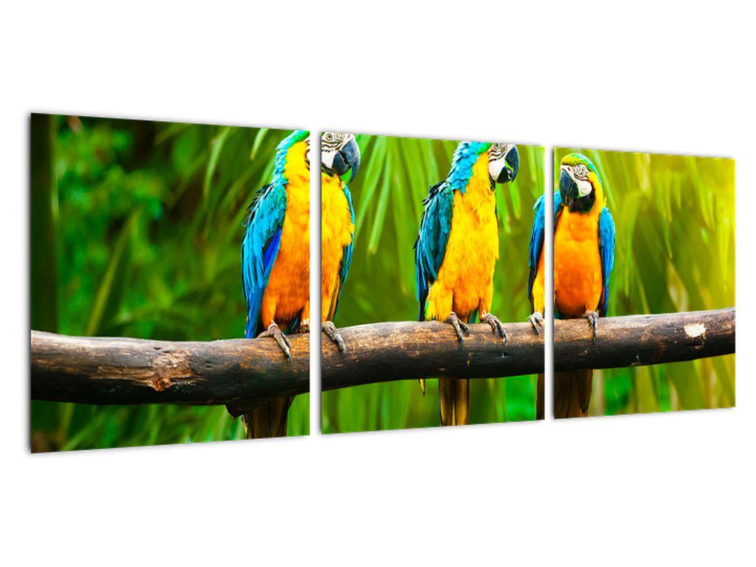 Moderný obraz - papagáje