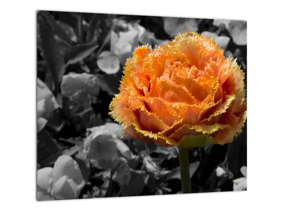 Oranžový kvet na čiernobielom pozadí - obraz