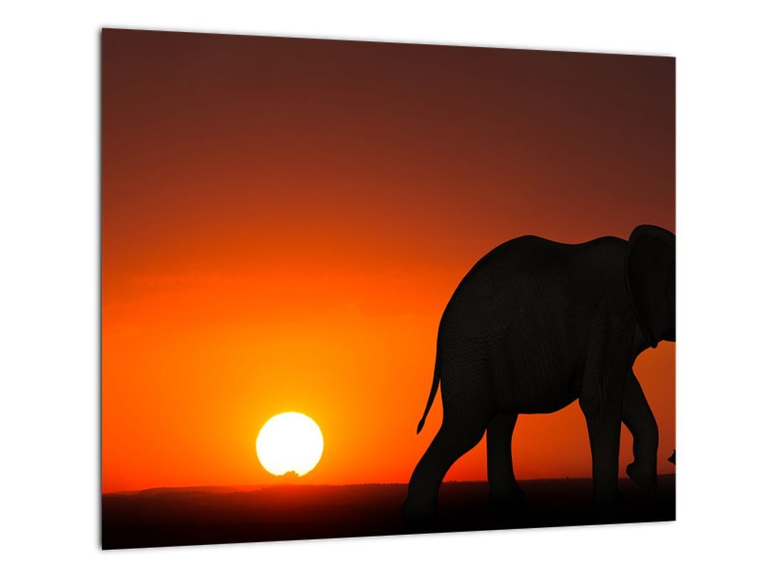 Obraz slona v zapadajúcom slnku
