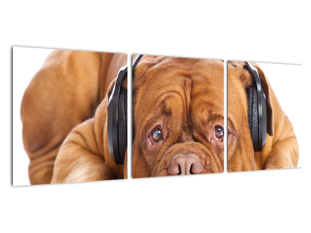 Moderný obraz - pes so slúchadlami