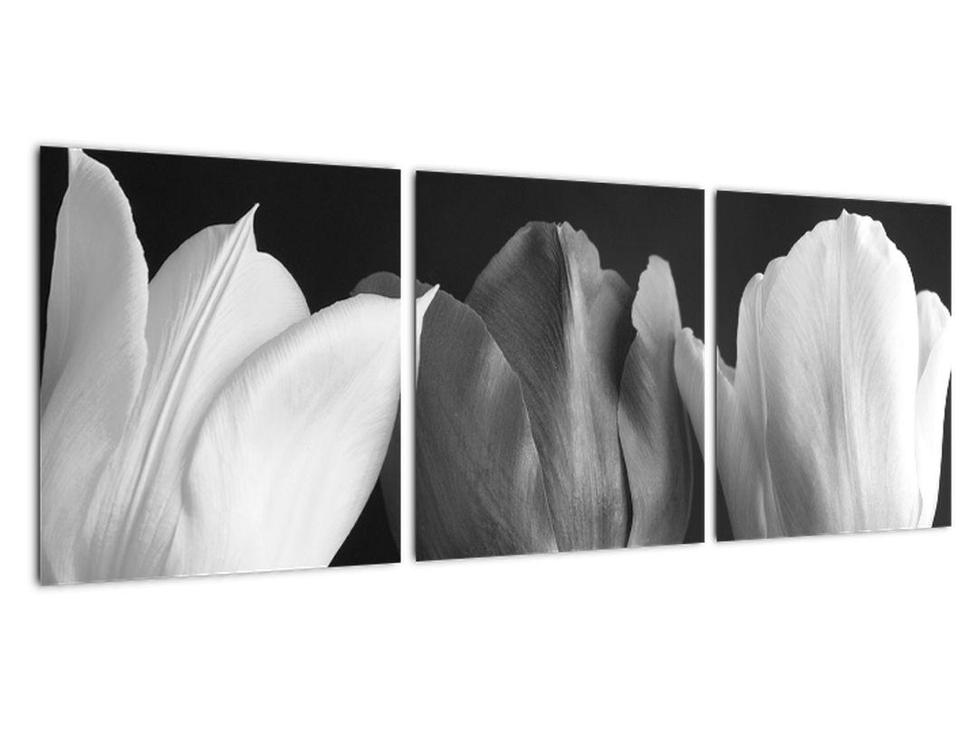 Čiernobiely obraz - tri tulipány