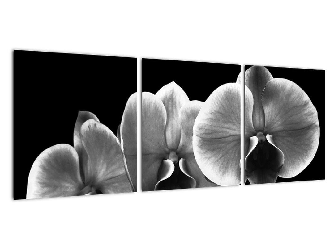 Čiernobiely obraz - orchidea