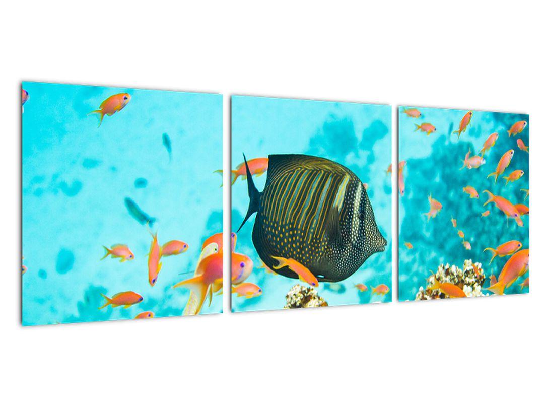 Obraz rýb v akváriami