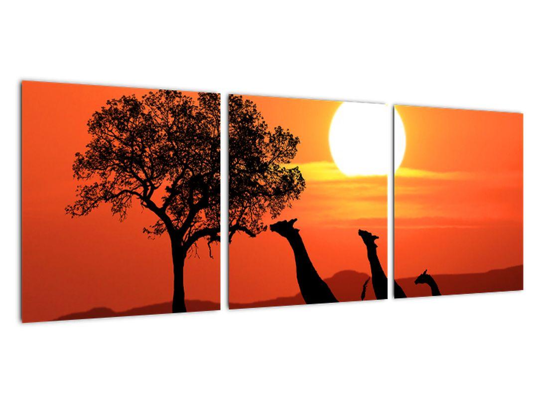 Obraz žirafy pri západe slnka