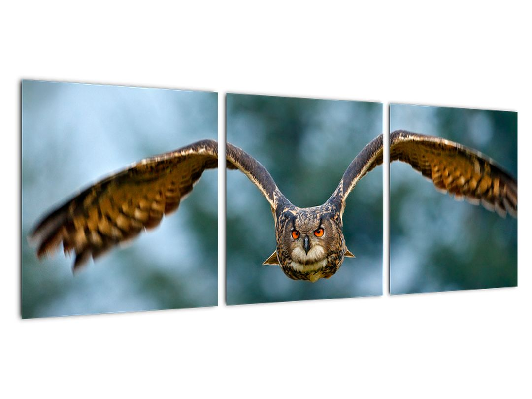 Obraz letiaci sovy