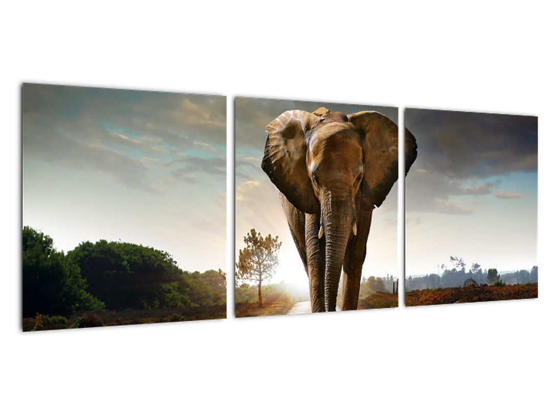 Obraz kráčajúceho slona