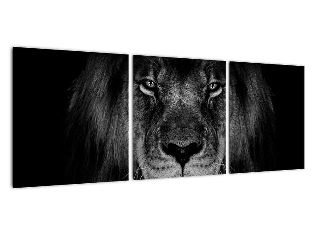 Obraz - lev v tme