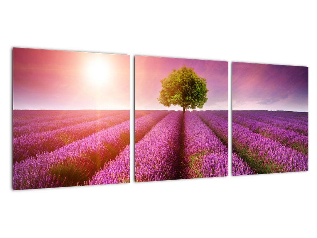 Levanduľové polia - obraz