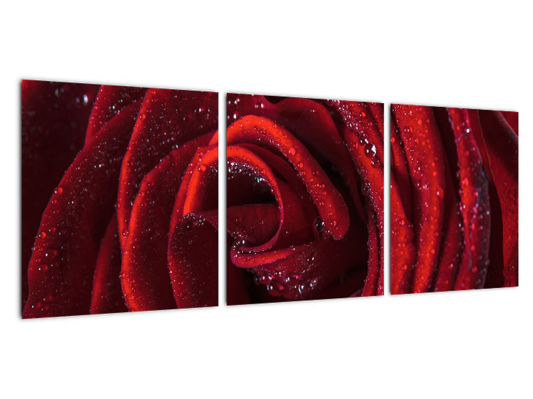 Obraz červené ruže