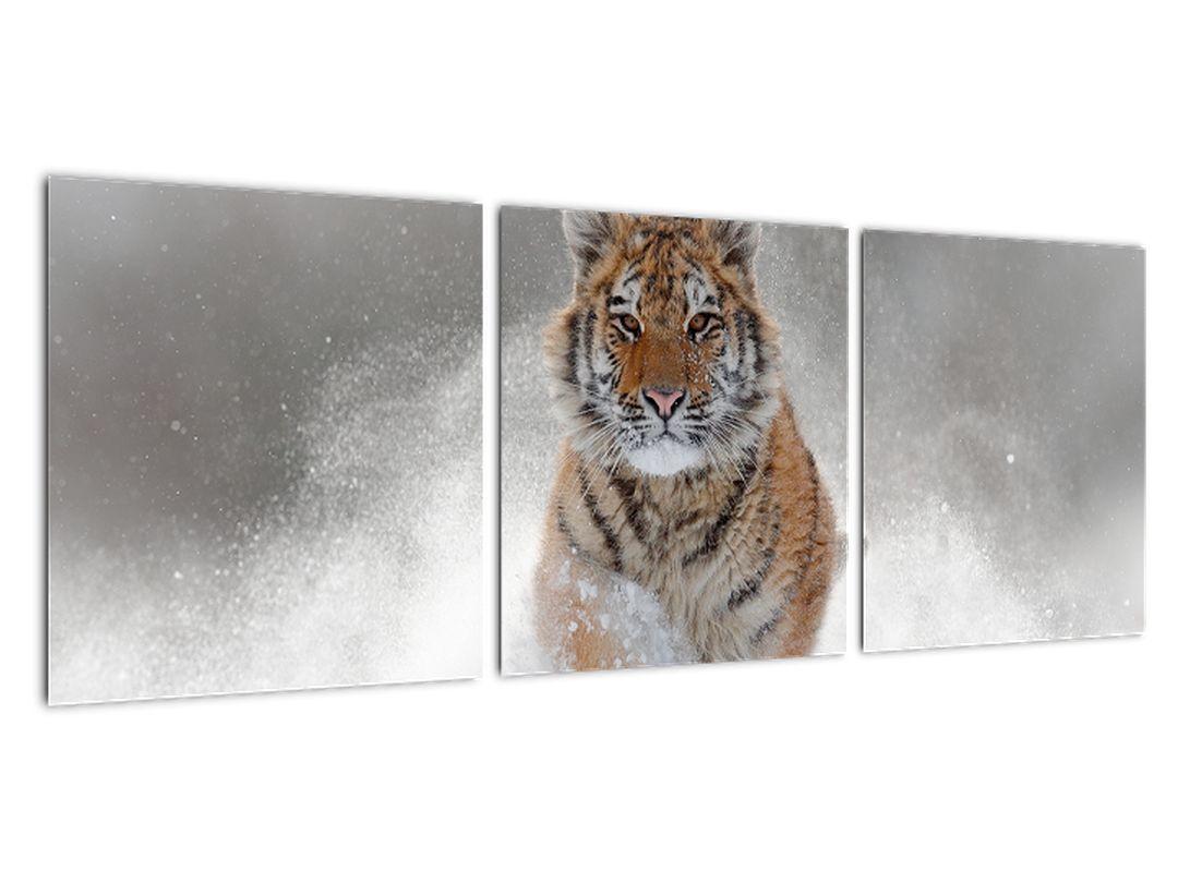 Obraz bežiaceho tigra