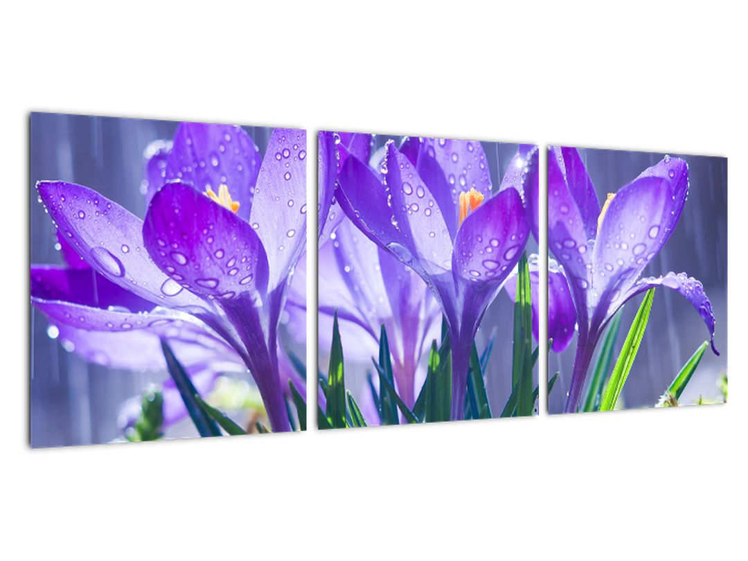 Obraz kvetov pri daždi