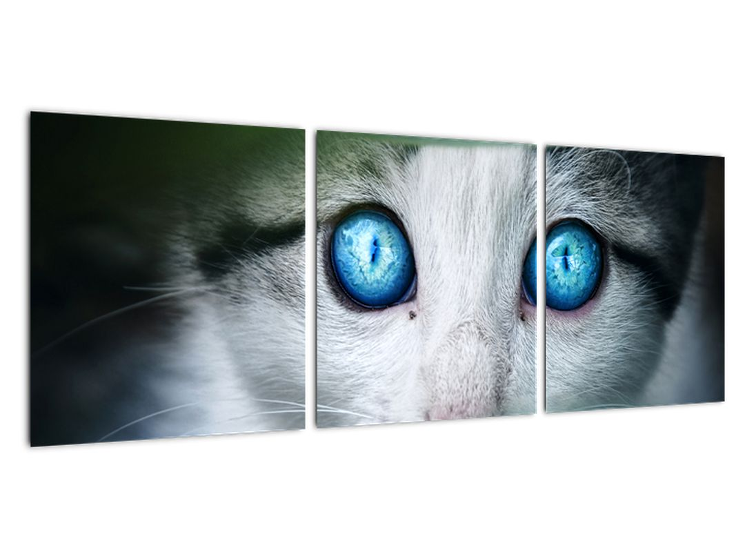 Obraz mačky, žiarivé oči