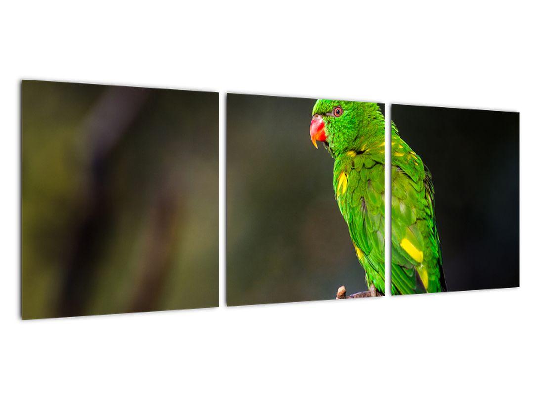 Obraz zeleného papagája