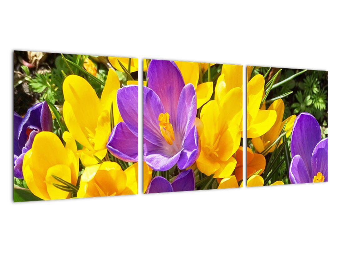 Obraz kvety
