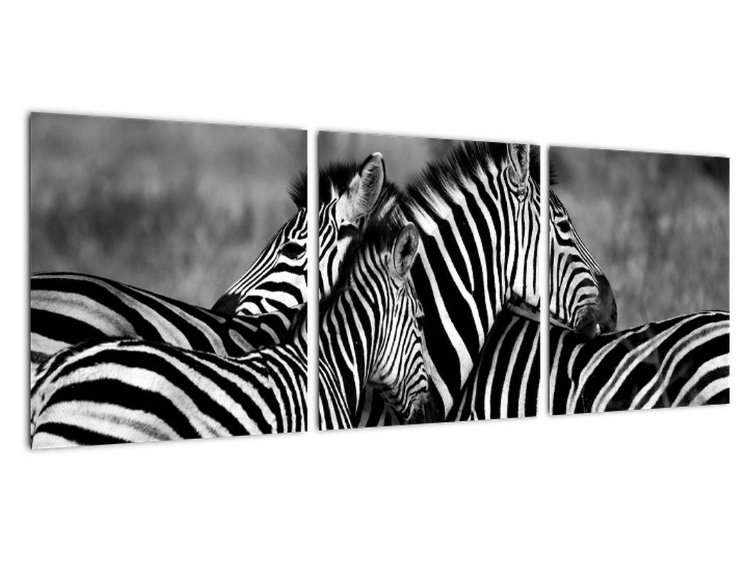 Obraz - zebry