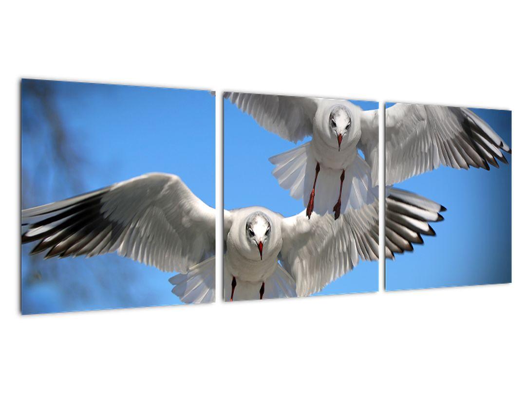 Obraz do bytu - vtáky