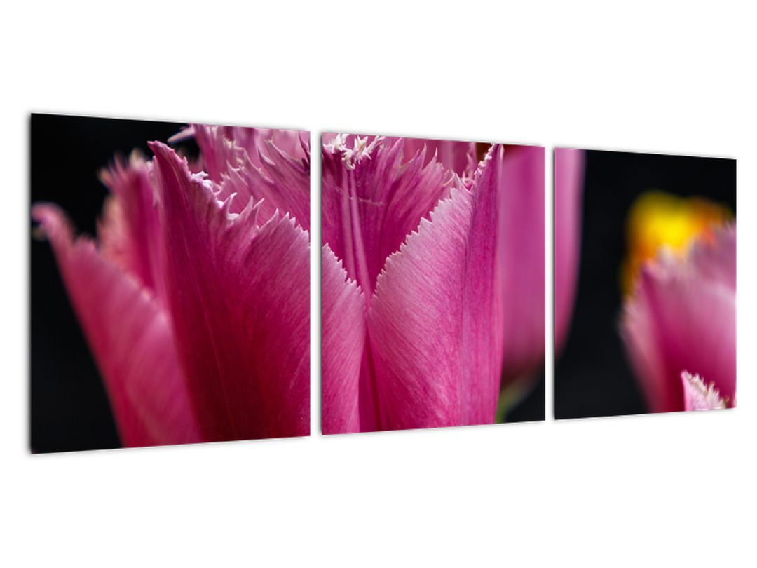 Tulipány - obrazy
