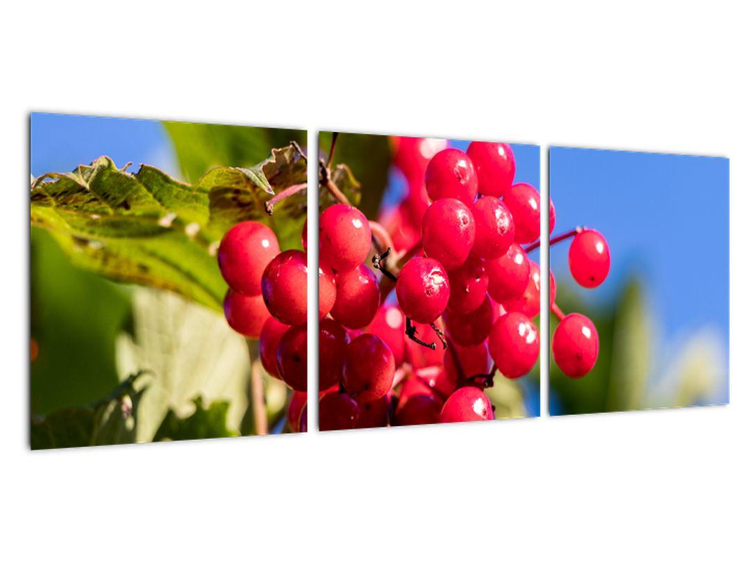 Obraz - rastliny
