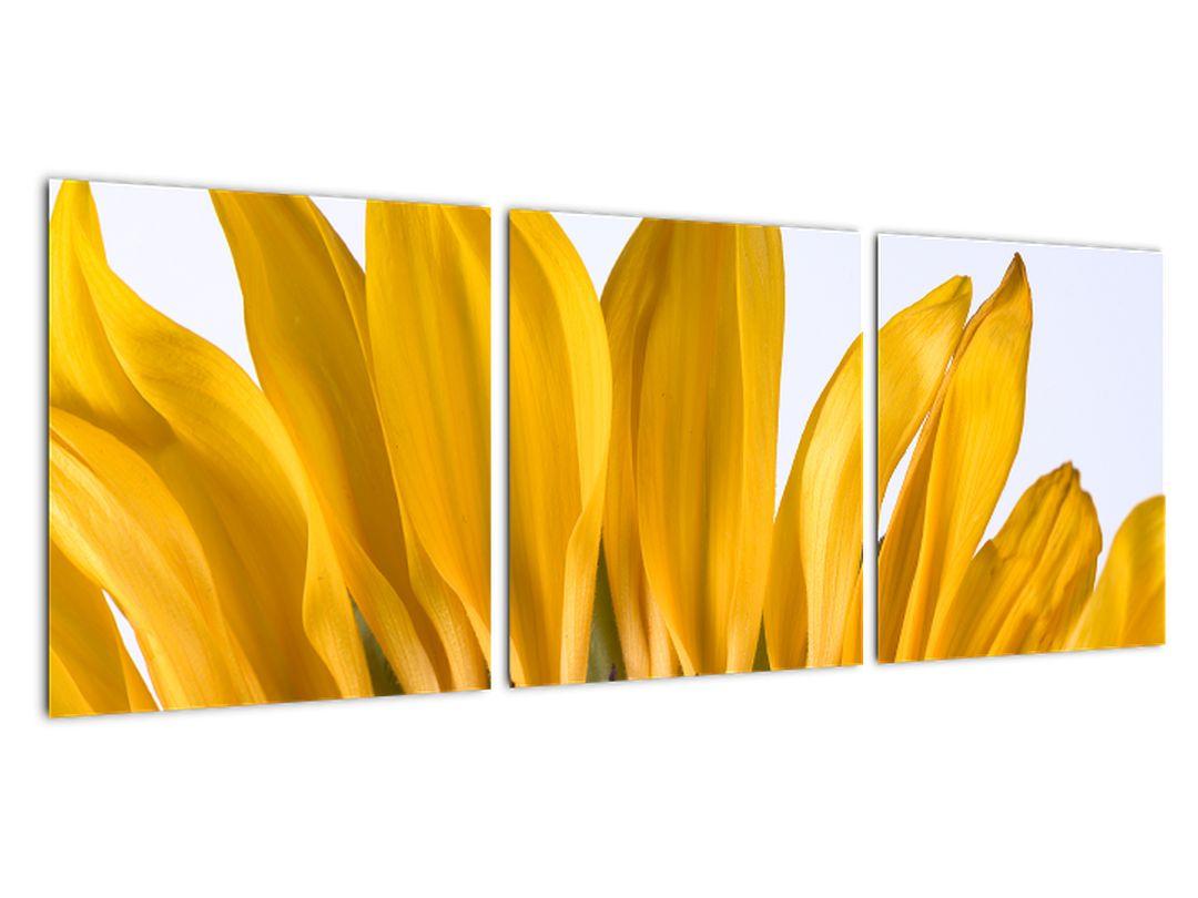 Obraz kvetu slnečnice