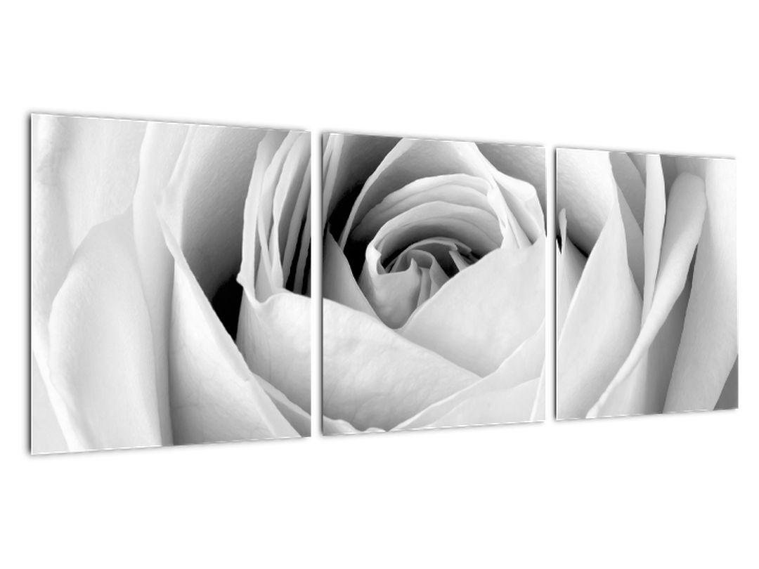 Čiernobiely obraz ruže