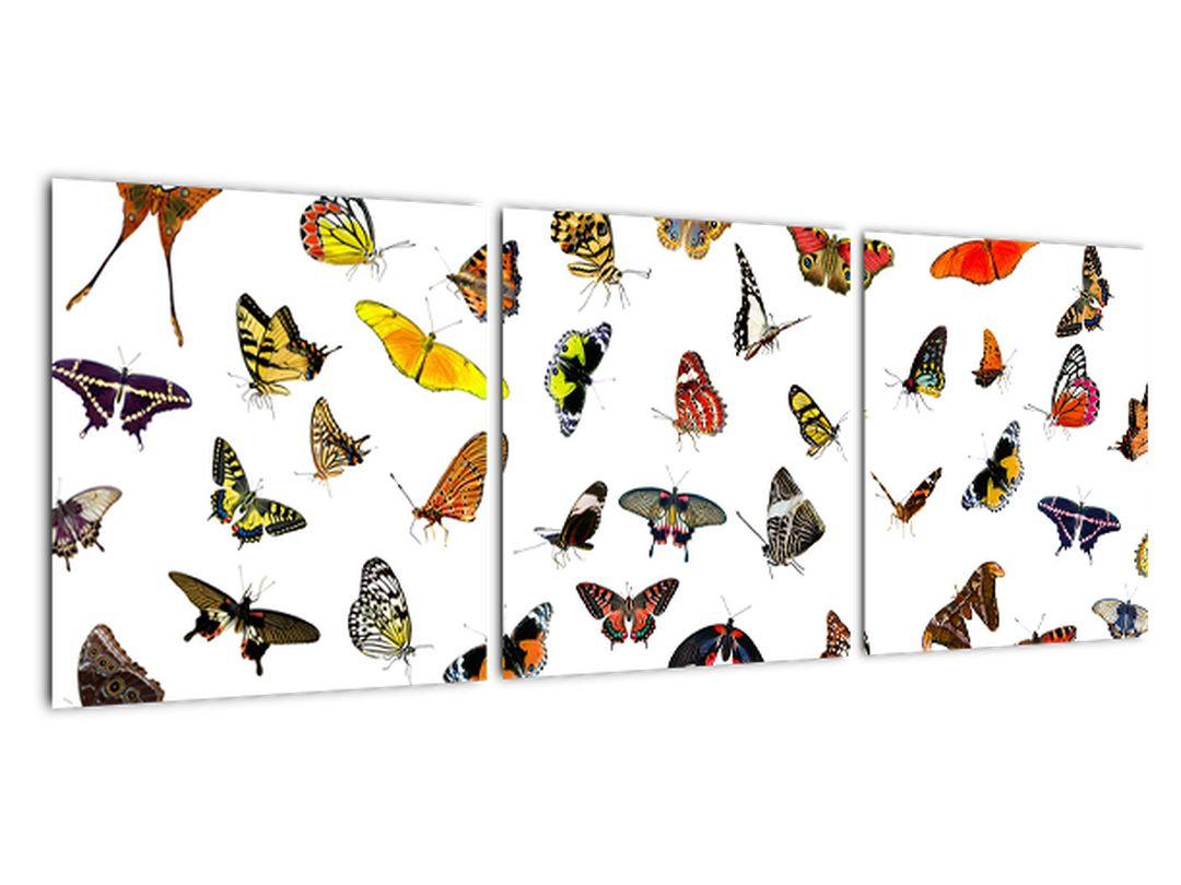 Obrazy motýľov