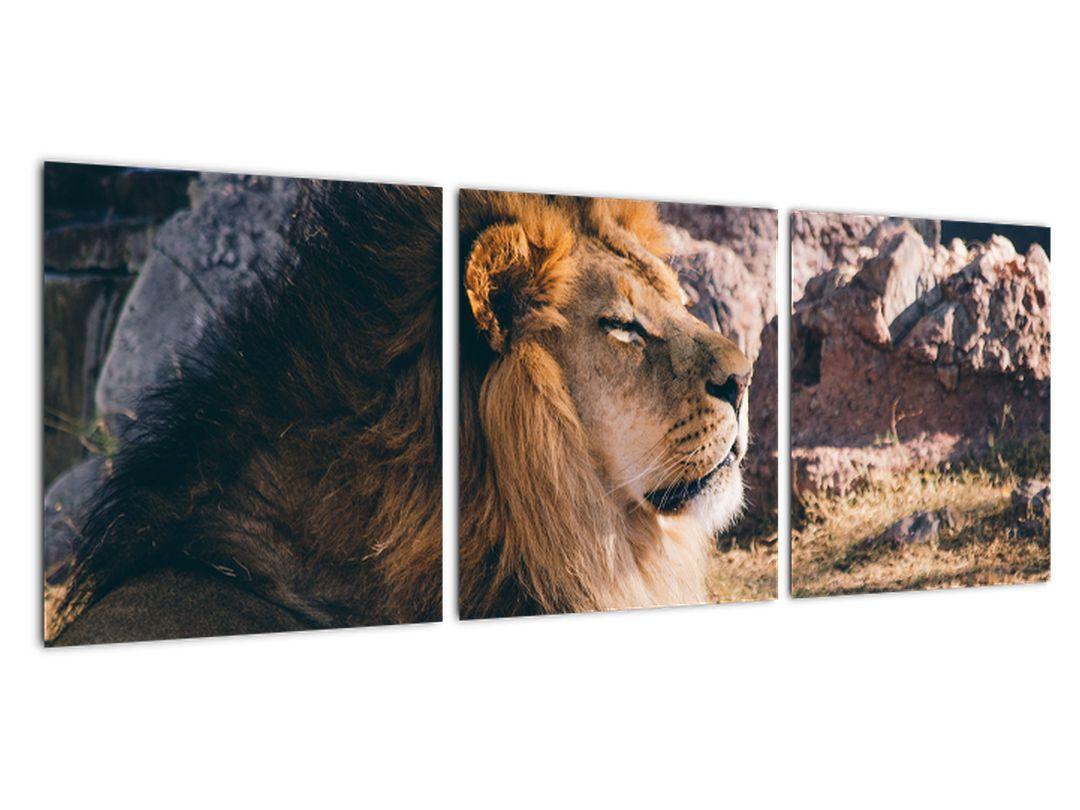 Obraz - ležiaci lev