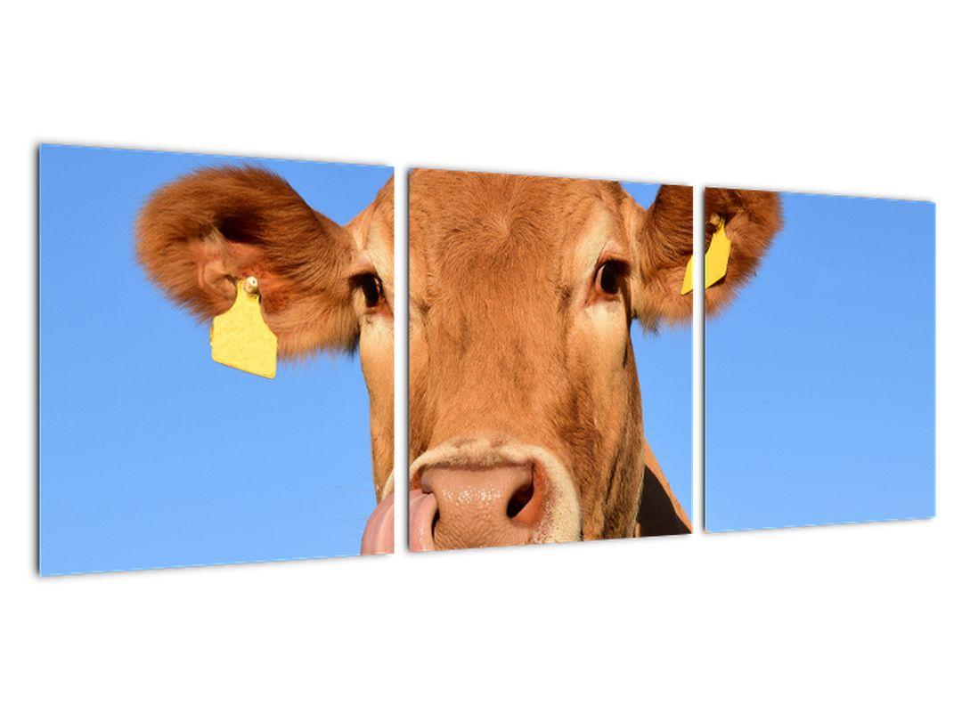 Obraz kravy