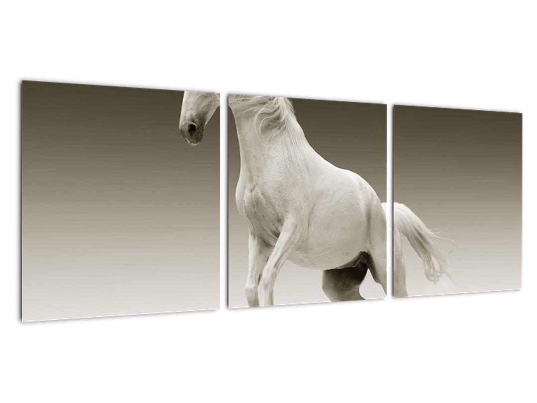 Obrazy bieleho koňa