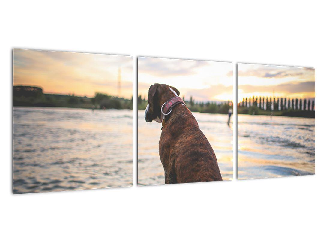 Obraz - sediaci pes