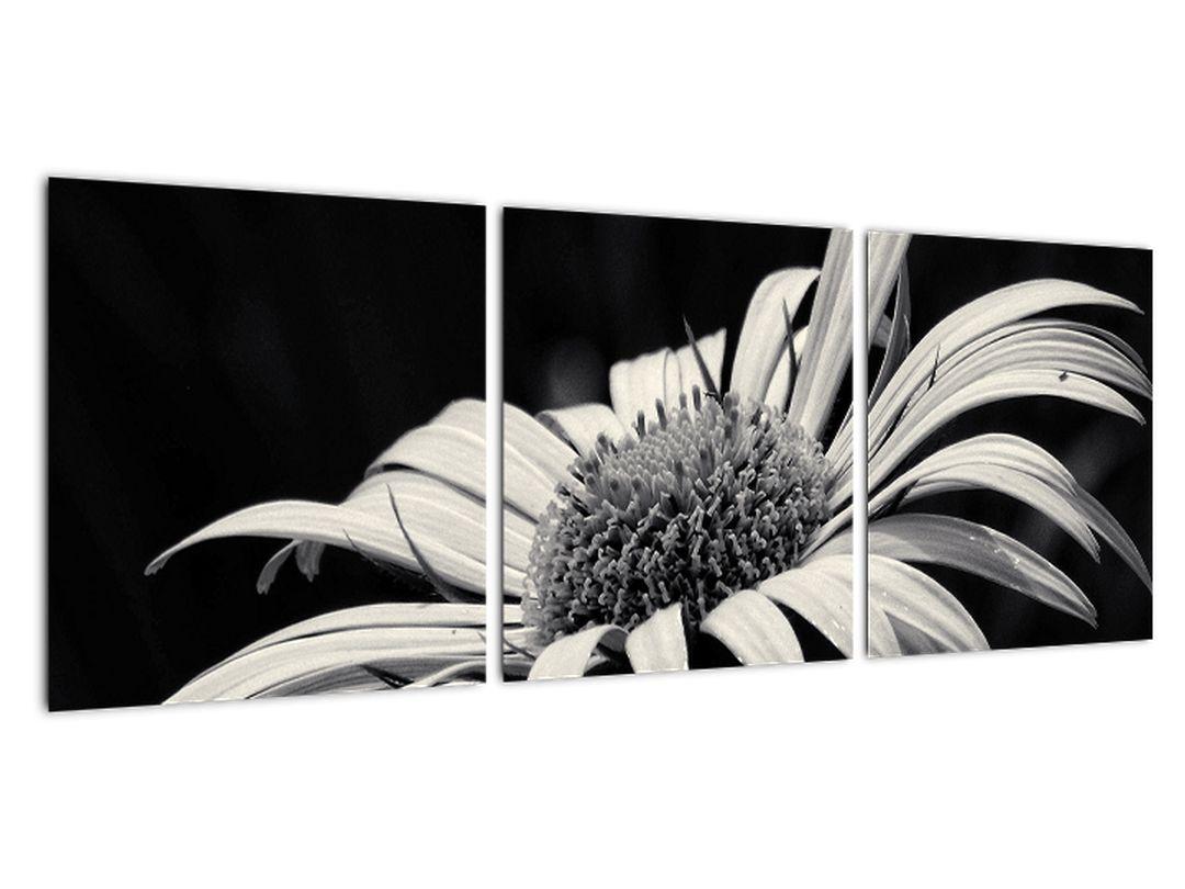 Čiernobiely obraz kvetu