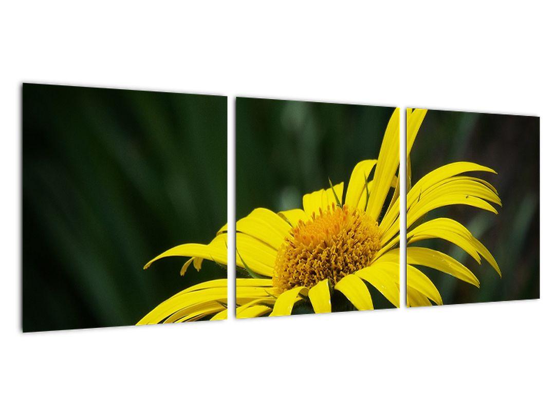 Obraz žltého kvetu