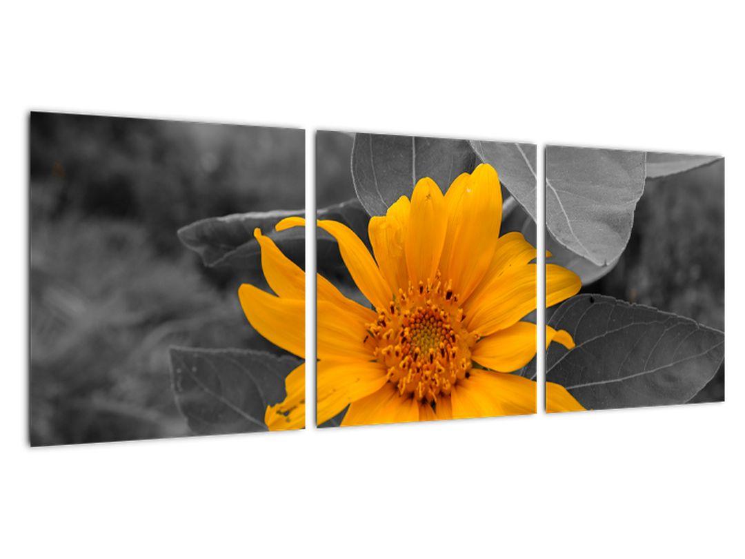 Obraz oranžového kvetu