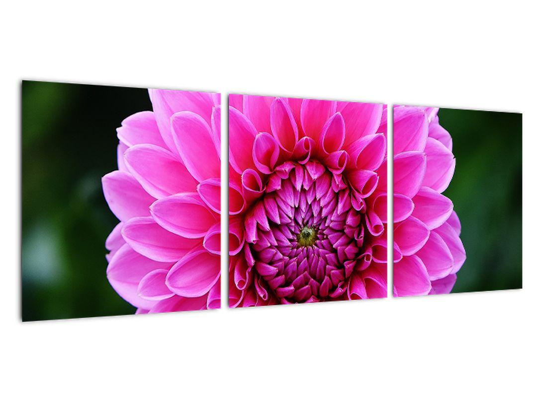 Obraz ružového kvetu