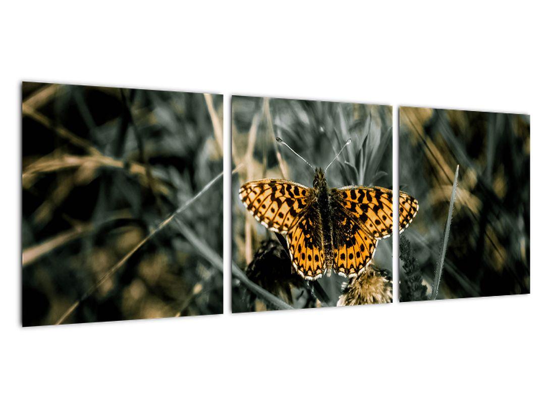 Obraz motýľa