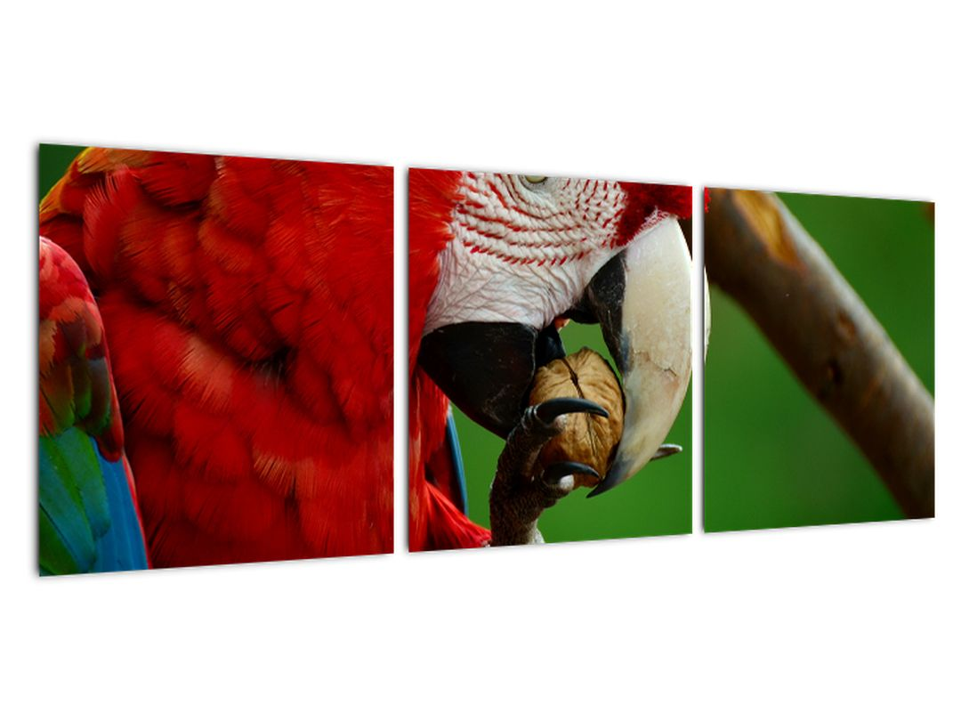 Obraz papagája