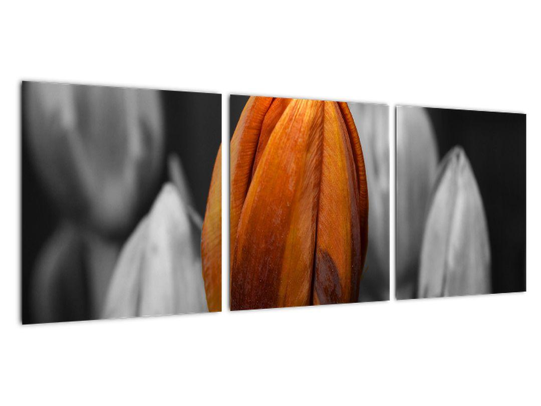 Oranžový tulipán medzi čiernobielymi - obraz