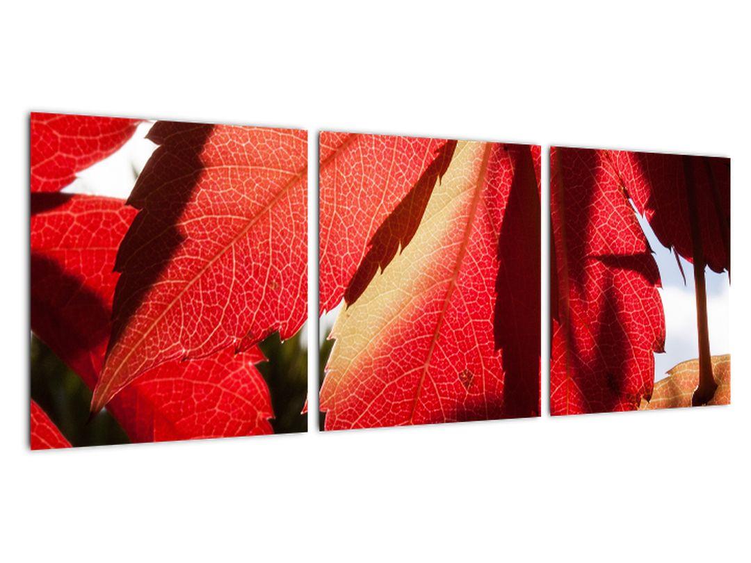 Obraz červených listov